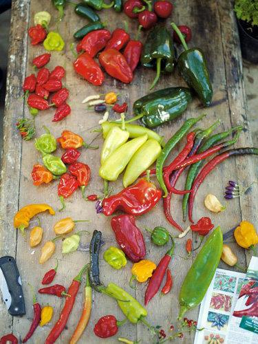 Рецепты постных блюд. Заправка салатная с чили