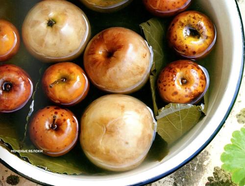 Рецепты заготовок. Моченые яблоки в банках