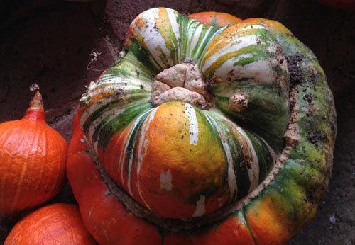 Какие блюда можно приготовить в сентябре