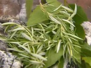Травы для салата