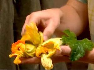 Как подготовить цветки кабачков для фритирования