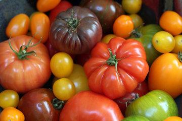 Богатство сортов помидоров