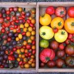 Урожай у Джейми в саду. Сбор урожая в августе