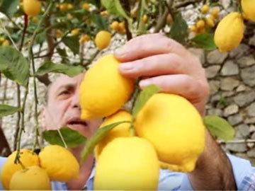 Как приготовить лимончелло 1